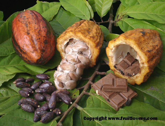 cacaopods2_001